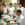 Cursos mtc estudiar y aprender acupuntura medicina china en Barcelona Juan José Plasencia
